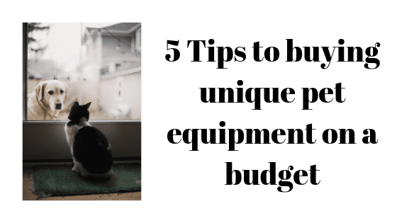 5 Tips to buying unique pet equipment on a budget