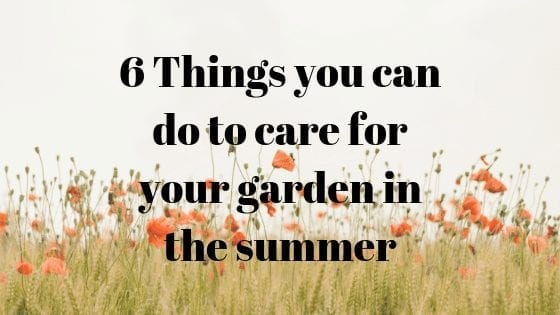 6 Things you can do to care for your garden in the summer