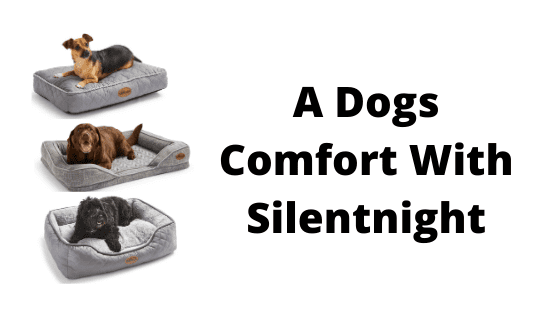 A Dogs Comfort With Silentnight