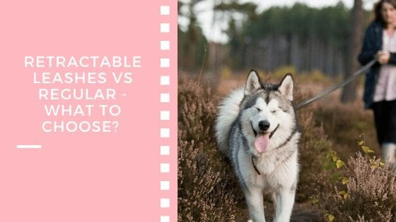Retractable Leashes vs Regular - What To Choose?