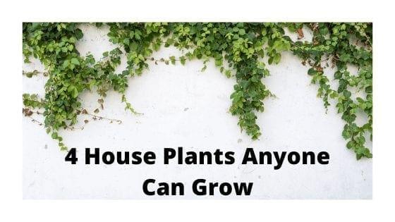 4 House Plants Anyone Can Grow