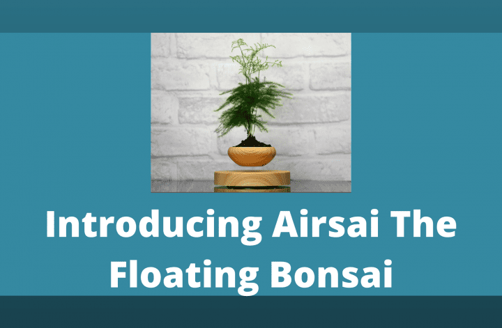 Introducing Airsai The Floating Bonsai
